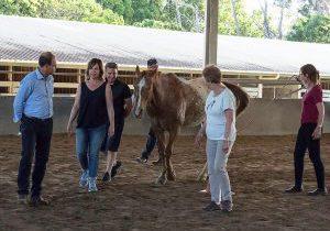 Bailey the horse
